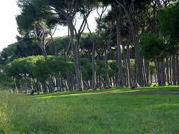 Pineta Ostia